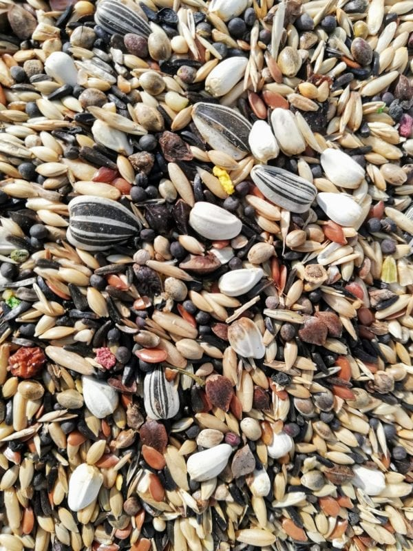 Close up image of bird seed suitable for Bullfinch and Greenfinch Birds