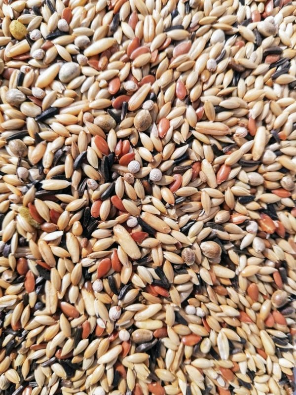 A mix of canary bird seed that is made in Belgium by specialist bird seed breeders