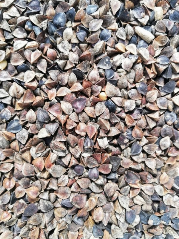 Buckwheat Straight Seed for Birds