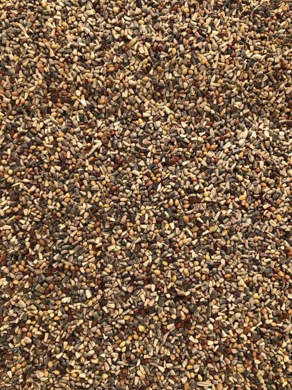 Chicory Bird Seed