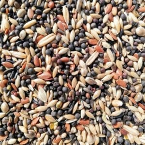 A mix of bird seed suitable for Finch Birds