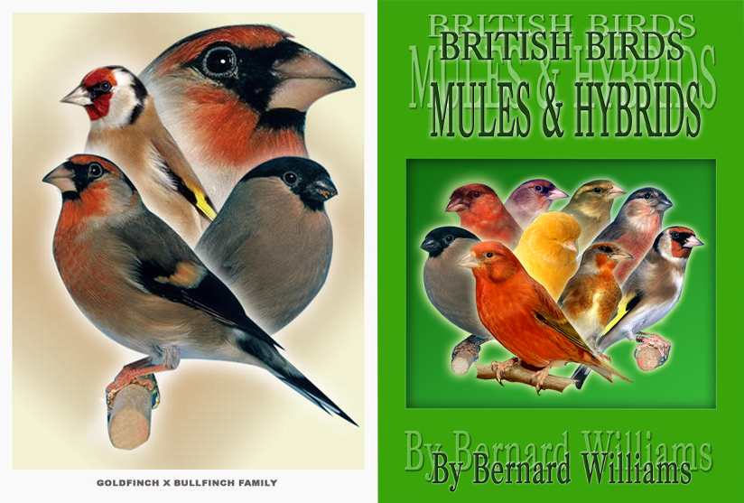 BRITISH BIRDS MULES & HYBRIDS